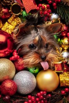 작은 치와와 강아지 흰색 배경에 고립 된 크리스마스 사슴처럼 포즈.