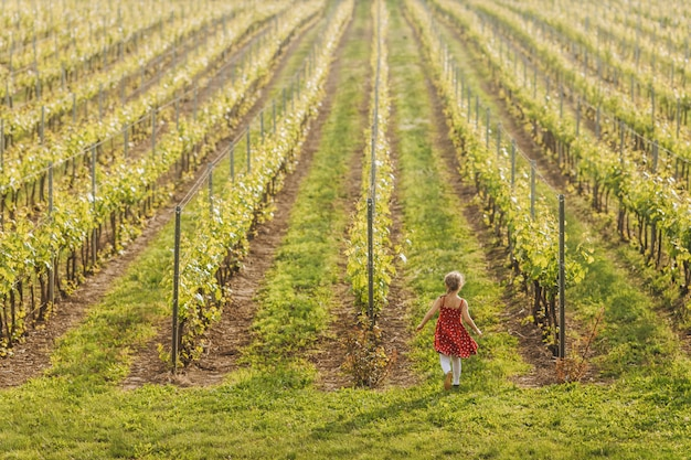 Little child in red dress is running in vineyard