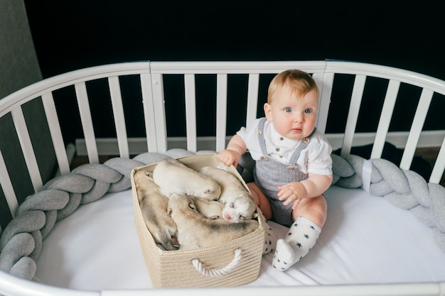 Little child siiting in crib with newborn husky puppies in the box.