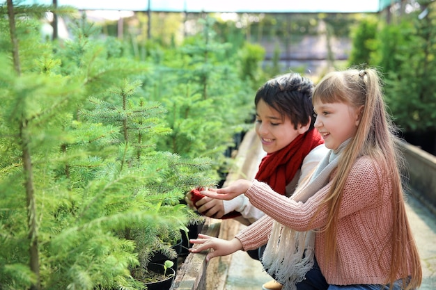 Little children choosing christmas tree in greenhouse