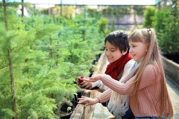 温室でクリスマスツリーを選ぶ小さな子供たち
