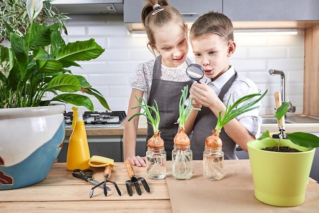 キッチンの背景に植物を持つ小さな子供たち。兄と妹は一緒に花を育てます。