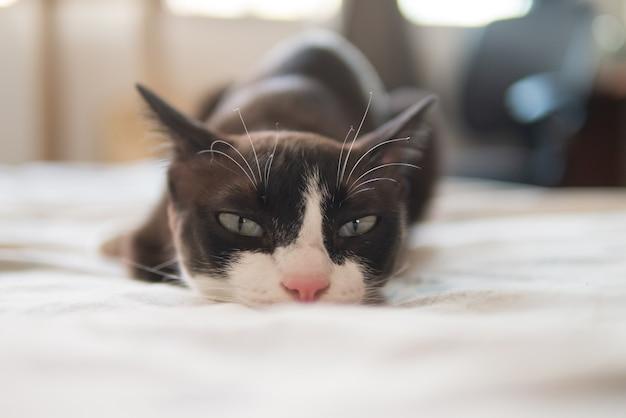 Маленькая шоколадно-коричневая маска с лицом и розовым носом котенок кошка лежит на удобной кровати