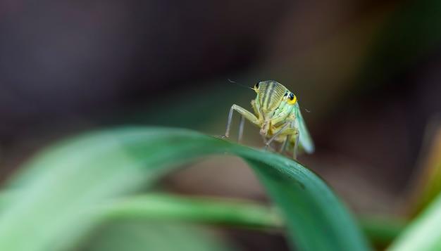 잔디의 잎에 작은 매미