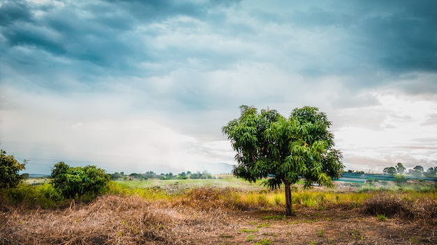 A little cloudy landscape in field with green tree