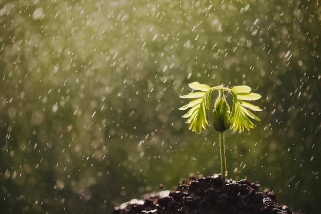 Маленький кофе ростки растут вдоль ручья саженцев.