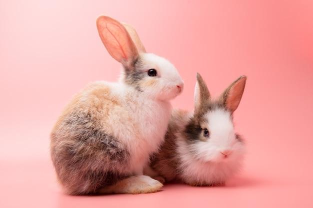 Маленькая пара белый и коричневый кролик, сидя на изолированном фоне розовых или старых роз в студии.
