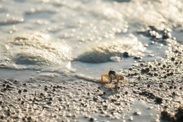 모션 바다 물결과 빛 bokeh, 크라비, 태국 해변에서 산책하는 작은 게