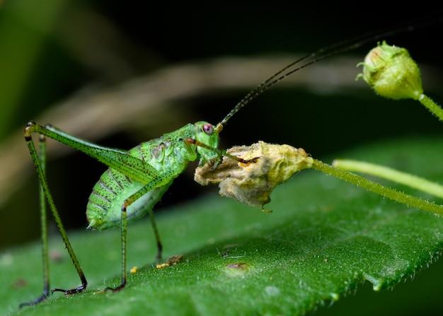 Little cricket eat flower in the night