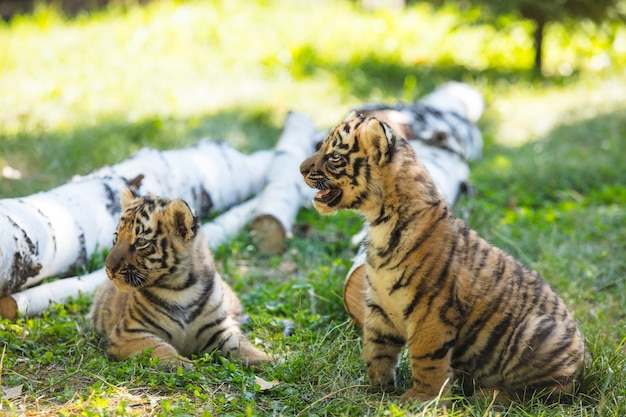 Маленькие детеныши в дикой природе на траве милые и забавные