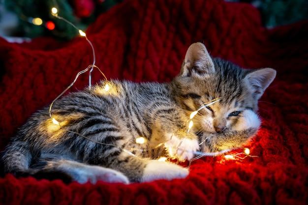 Маленький любопытный забавный полосатый котенок играет с гирляндой из гирлянд на празднике