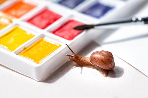 Little curious snail crawls looks into watercolors palette. art and creativity concept. space for text