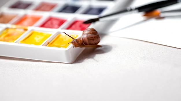 少し好奇心が強いカタツムリが水彩絵の具パレットを這います。アートと創造性の概念。テキストのためのスペース