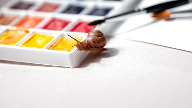 Little curious snail crawls on watercolors palette. art and creativity concept. space for text