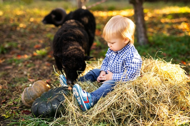 Little curly blonde girl in denim jacket and pink boots feeding black domestic sheep. farmer's life concept
