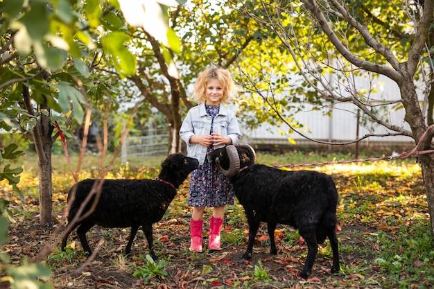 カントリーガーデンで2つの黒い国内羊を養うデニムジャケットとピンクのブーツで少し巻き毛のブロンドの女の子。農夫の生活コンセプト