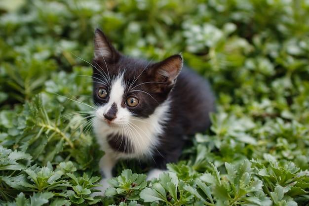 밖에 있는 풀밭에 앉아 있는 작고 귀여운 검은 고양이