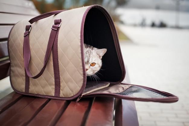애완 동물 캐리어에 작은 귀여운 고양이