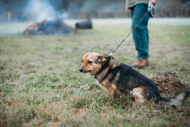 추운 날씨에 산책을위한 작은 귀여운 강아지