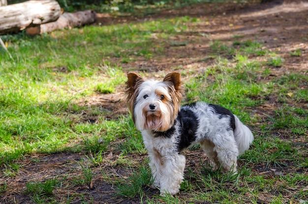 森の中の小さなかわいい犬