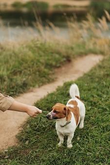 작은 귀여운 강아지는 자연의 공원에서 산책. 애완 동물