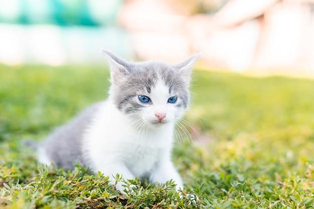 夏の日の緑の草の小さなかわいいふわふわ灰色の子猫。自然の中の子猫の肖像画。