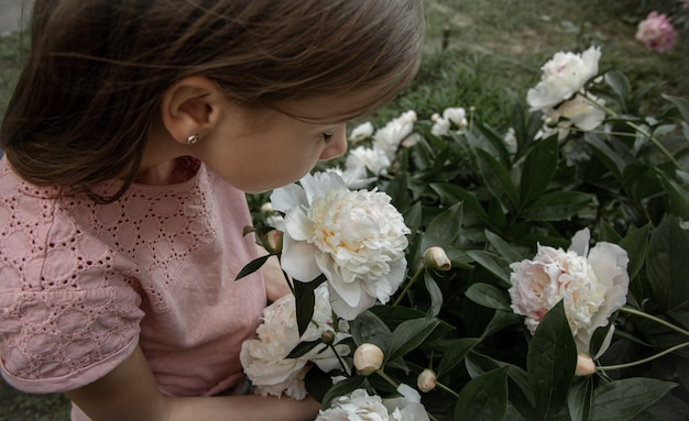 A little cute girl sniffs a bush of white peony flowers blooming in the garden.