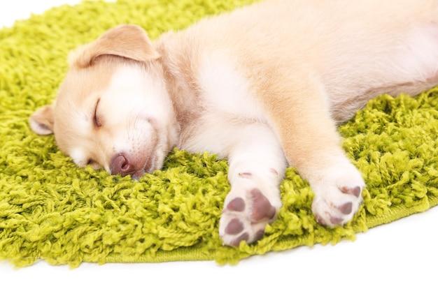 緑のカーペット、白の小さなかわいいゴールデンレトリバーの子犬