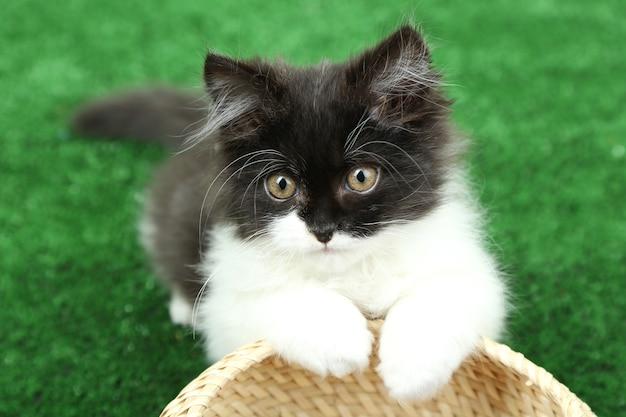 緑の草の上の小さなかわいい子猫