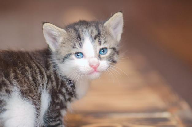 Little cute kitten portrait