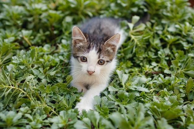 외부 잔디에 앉아 작은 귀여운 새끼 고양이