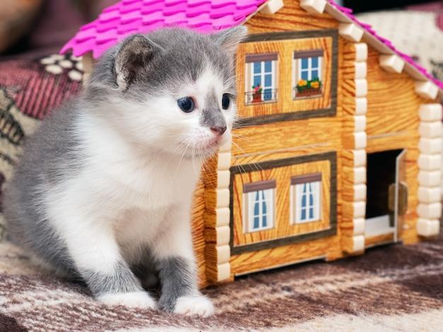 おもちゃの家の近くに座っている小さなかわいい子猫