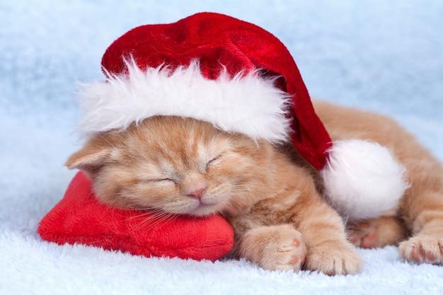 산타 모자를 쓰고 귀여운 새끼 고양이가 하트 모양의 베개에 미끄러졌습니다.
