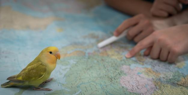 Маленькая милая птичка в поисках карты для путешествий