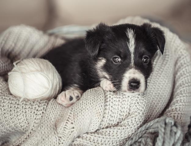 セーターの上に横たわっている小さなかわいい子犬