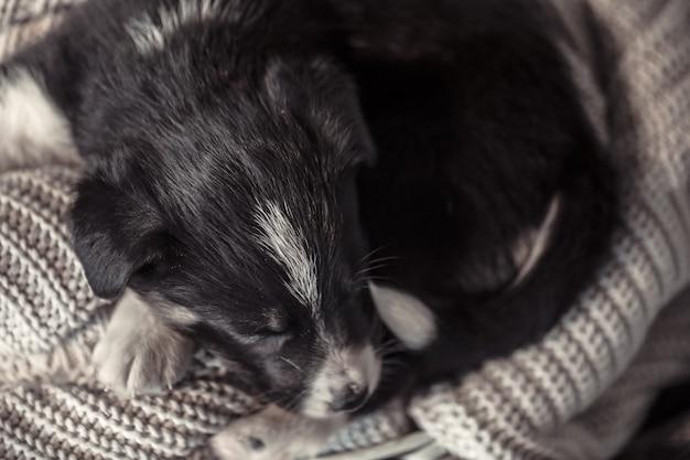 セーターで横になっている小さなかわいい子犬
