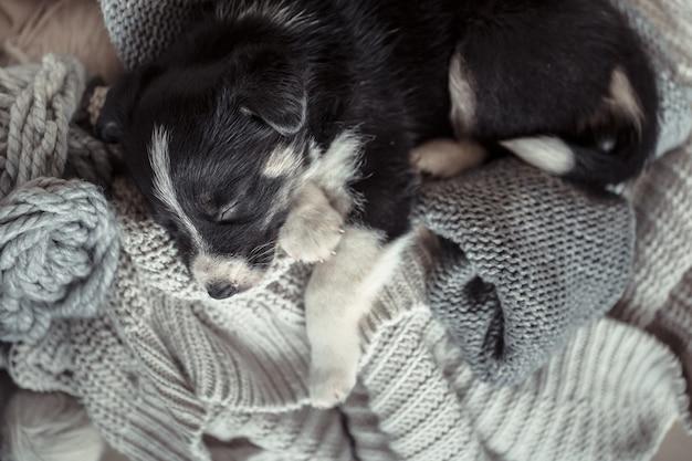Маленький милый щенок, лежащий в свитере
