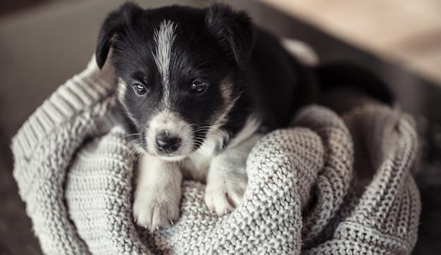 Piccolo cucciolo carino sdraiato con un maglione.