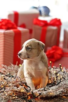 クリスマスの小さなかわいい子犬 Premium写真