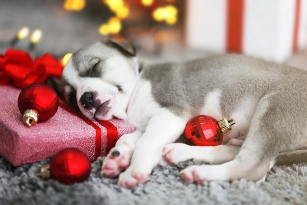 크리스마스 배경에서 자고 있는 작은 귀여운 강아지