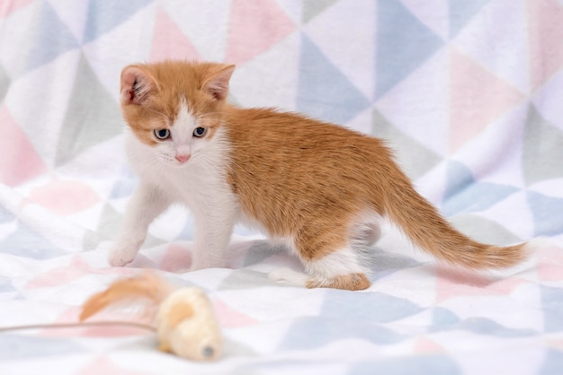 Маленький милый рыжий котенок играет с игрушкой на одеяле