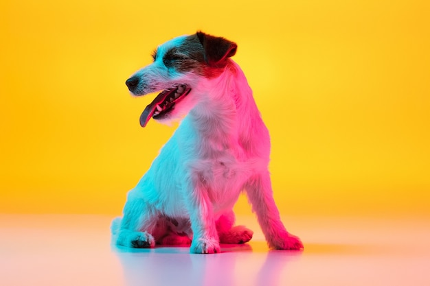 Little cute terrier dog posing isolated over studio in neon lights