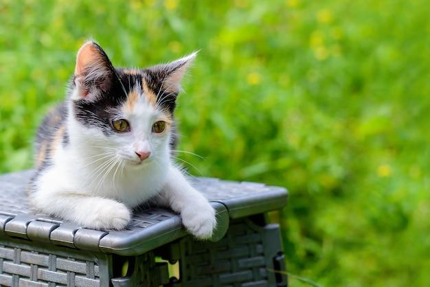 Маленький милый трехцветный котенок, лежащий в летнем саду