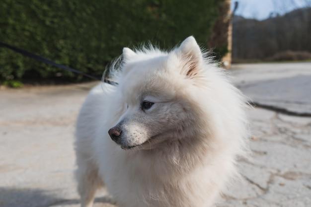 Little cute white dog outside.