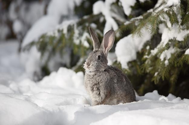 雪の上の小さなかわいい白いウサギ