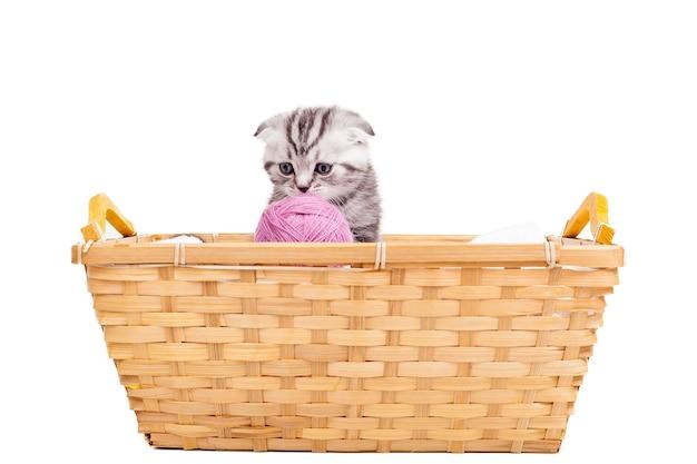 Маленькая милашка. милый котенок шотландской вислоухой сидит у корзины с шерстяным клубком, лежащим рядом с ним