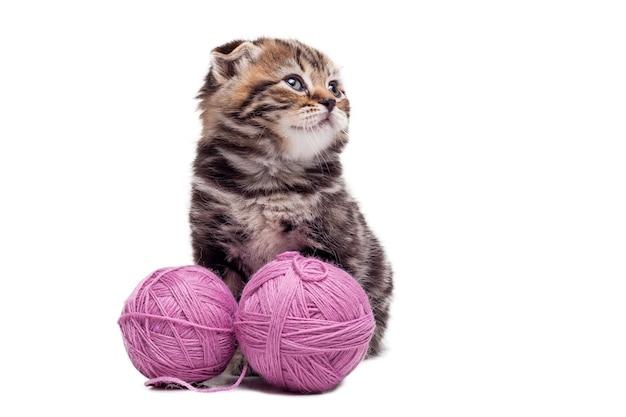 Маленькая милашка. милый котенок шотландской вислоухой сидит возле клубков шерсти и смотрит в сторону