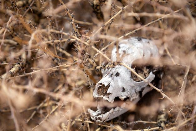 Маленькая мертвая голова животного между растениями