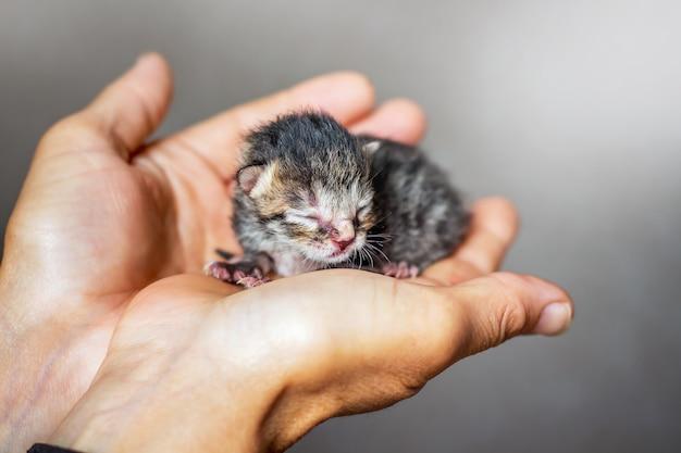피난처를 찾는 작은 무방비 고양이