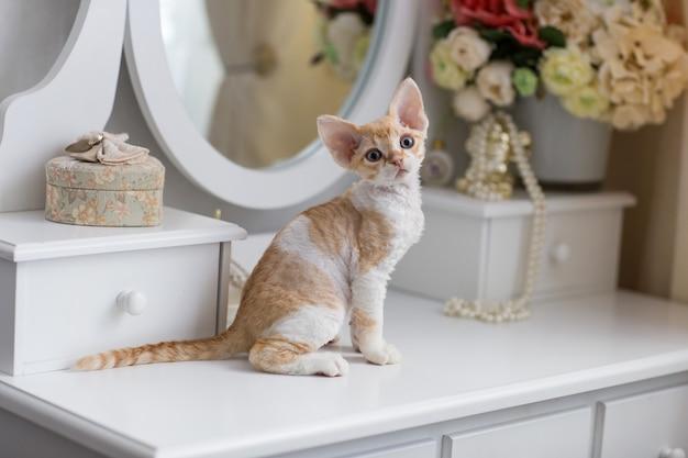 小さなデボンレックスの子猫が化粧家具の上に座っています